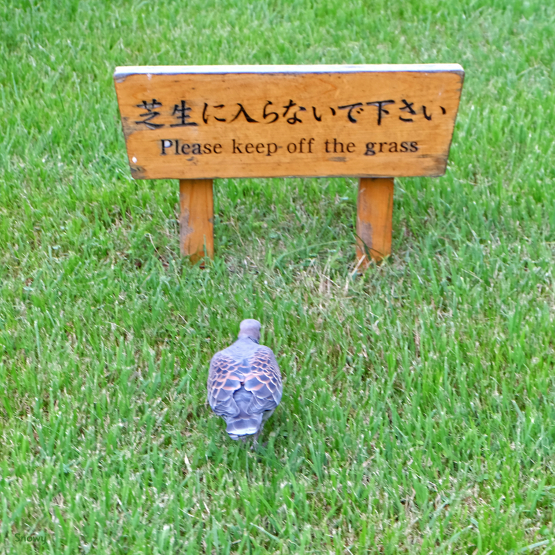 清澄庭園(2016-06-29)