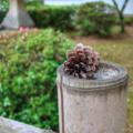 [山口]八坂神社@山口市(2018-05-30)