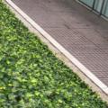 [東京][街角]文京グリーンコート(2018-07-22)