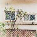 [窓][東京][街角](2018-09-13)