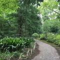 [東京][公園]六義園(2018-09-20)