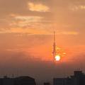 [東京][朝][太陽][逆光][朝焼け](2018-11-05)