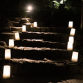 [階段][公園][灯り]肥後細川庭園ひごあかり(2018-11-28)
