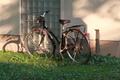 [黄昏][公園][自転車]井の頭公園(2018-11-10)