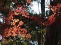 [紅葉][冬]六義園(2019-01-02)