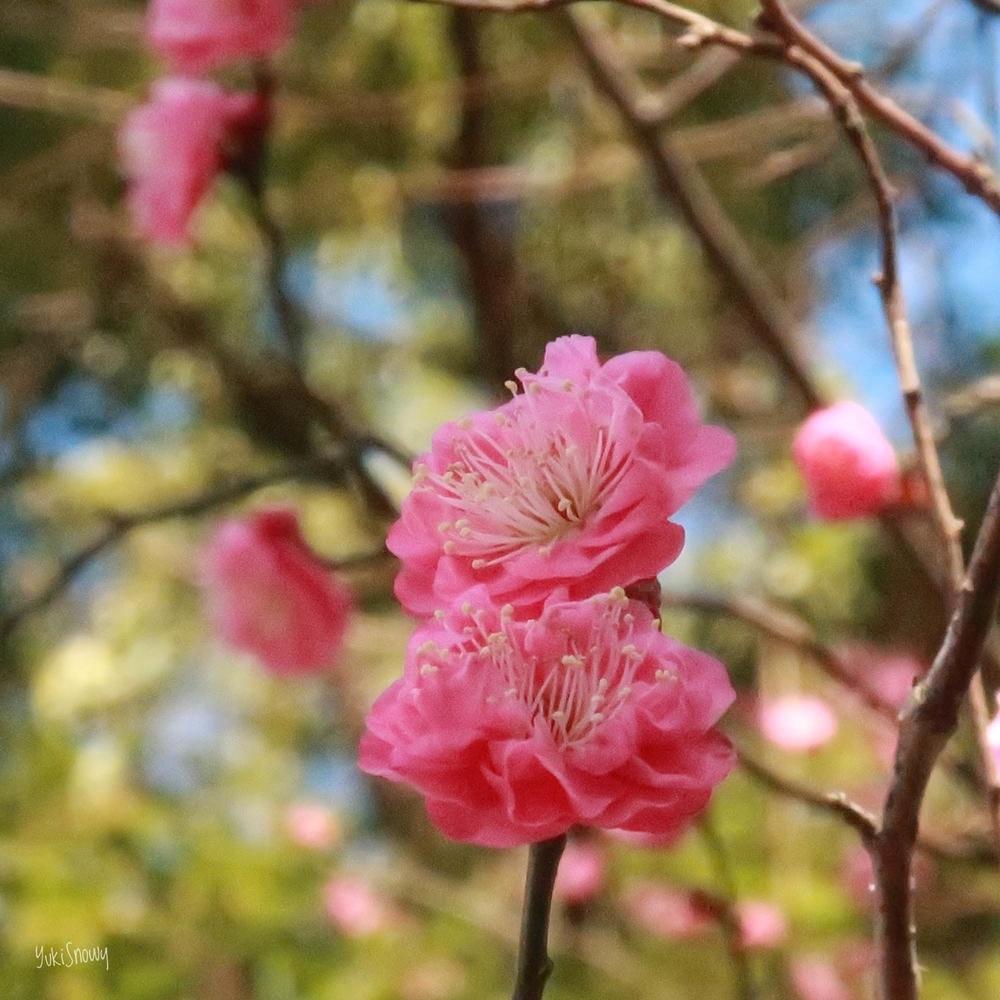 牛天神北野神社(2019-01-18)