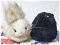 [ぬいぐるみ]ぬいぐるみオフ―シルベスターとウサギ