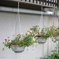 [山口][植物]2018-05-30