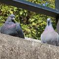 [東京][公園][野鳥]元町公園(2019-02-25)