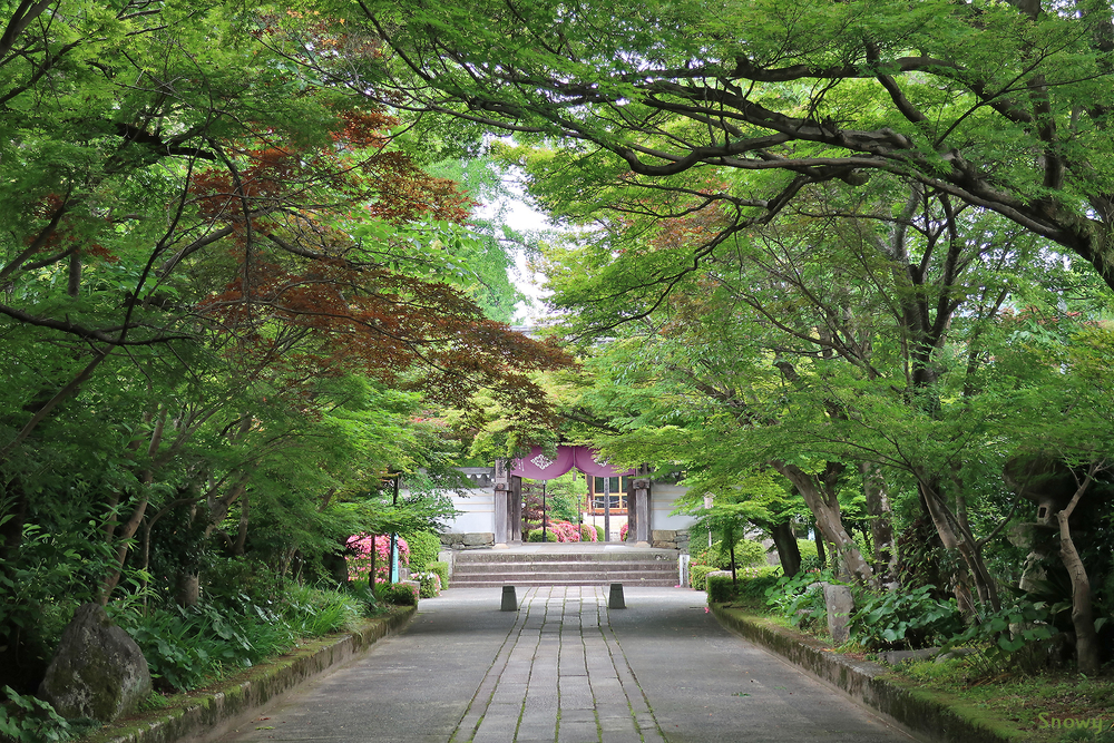 龍福寺参道(2018-05-30)