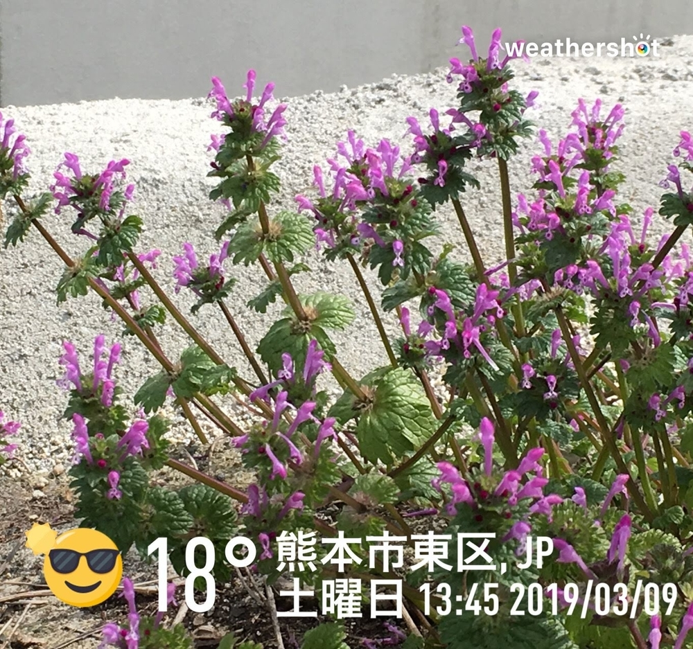WeatherShot(2019-03-09 13:45)