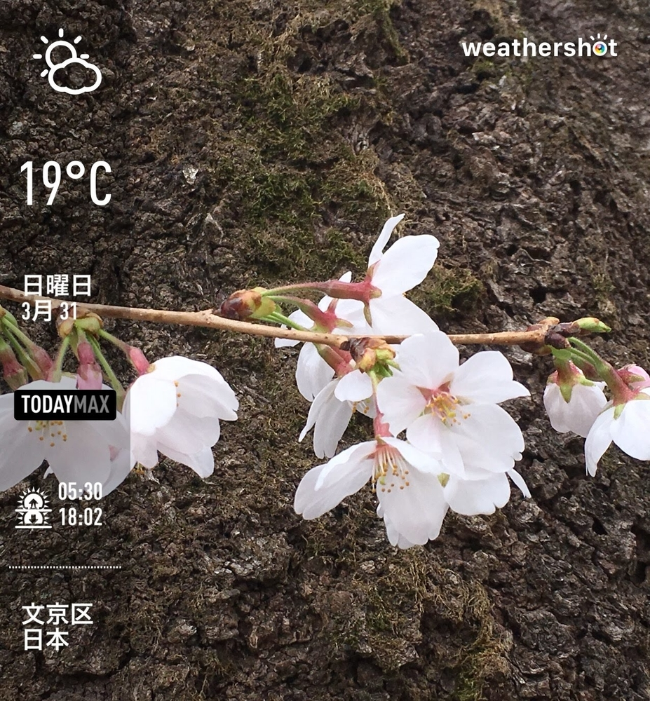 WeatherShot(2019-03-31)