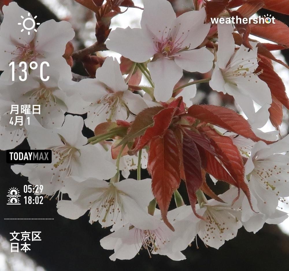WeatherShot(2019-04-01)