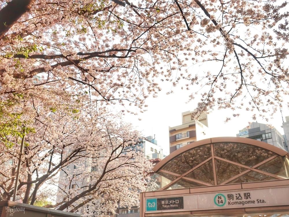 駒込駅の桜(2019-04-06)