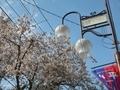 [東京][街灯]小平市たかの台(2019-04-06)