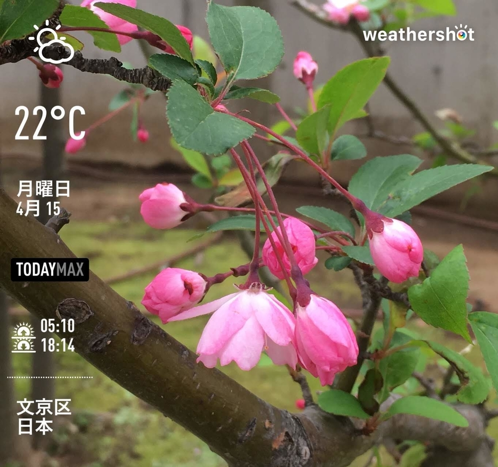 WeatherShot(2019-04-15)