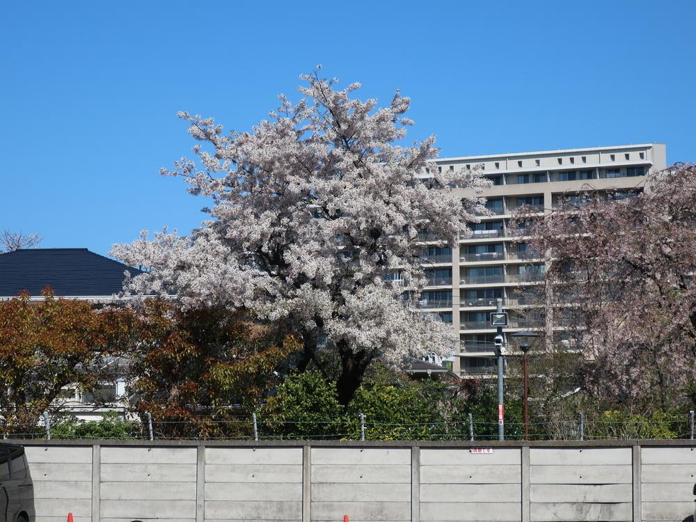 文京学院大学女子高等学校横あたり(2019-04-13)