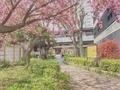 [東京][街角][花]笹塚駅前(2019-04-19 13:25)