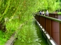 [東京][公園]不忍池(2015-06-18)