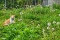 [東京][谷根千][猫]根津(2012-05-09 10:20)