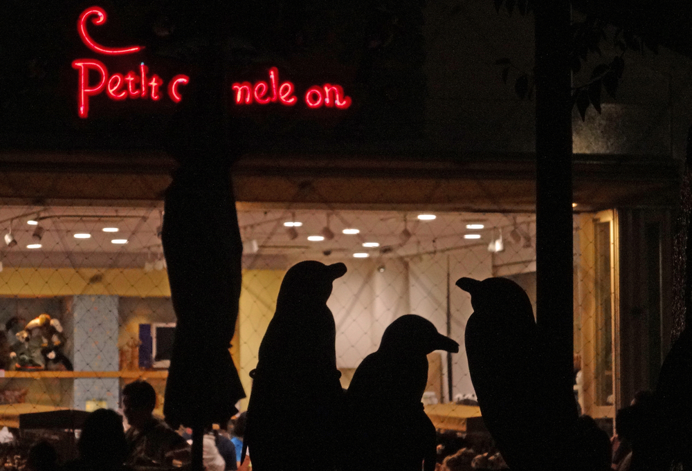 Penguin Night Fever