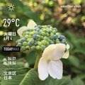 [Instaweather]WeatherShot(2019-06-04)