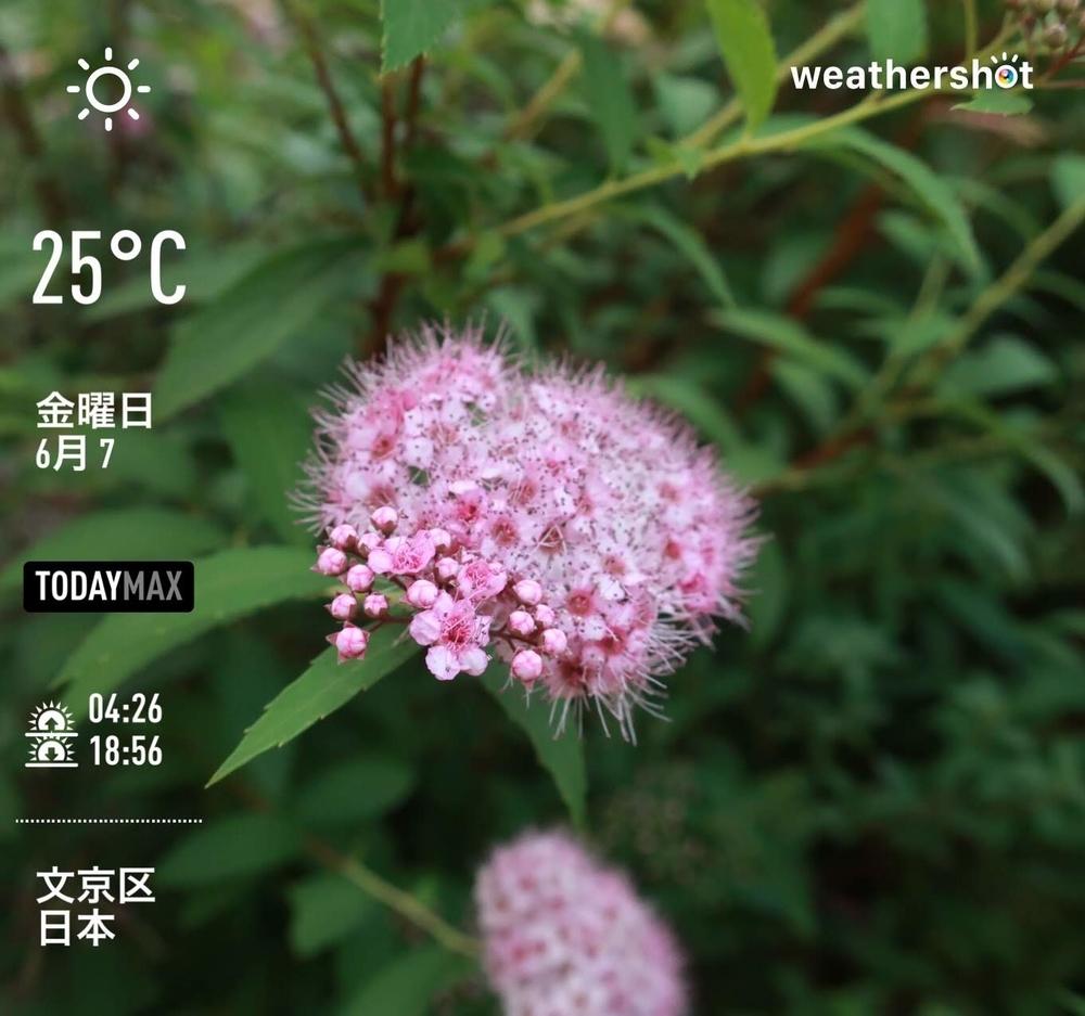 WeatherShot(2019-06-07)