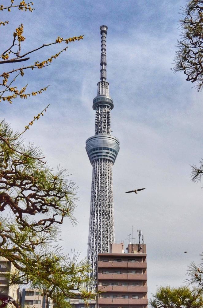 東京スカイツリー(2019-03-19 14:28)