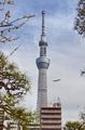 [東京]東京スカイツリー(2019-03-19 14:28)