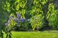 [花][緑]枝垂れ桜と紫陽花@六義園(2019-06-20 15:53)