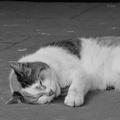 [猫]@愛宕神社(2019-06-28)