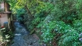 [東京][川][花]高尾山稲荷山コース起点(2019-06-26 10:18)