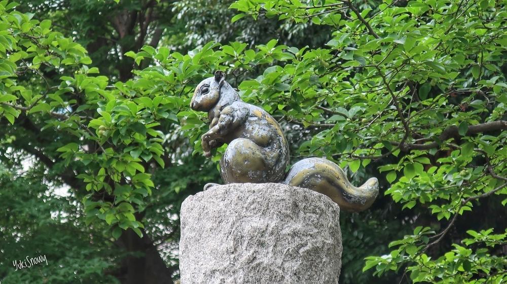 芝公園のリス(2019-06-28 14:25)
