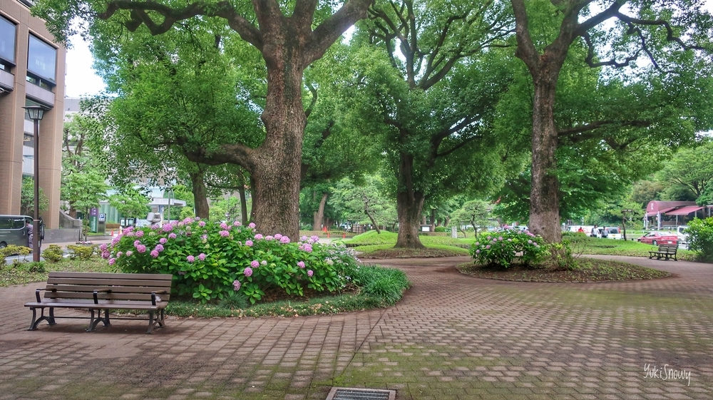 芝公園(2019-06-28)