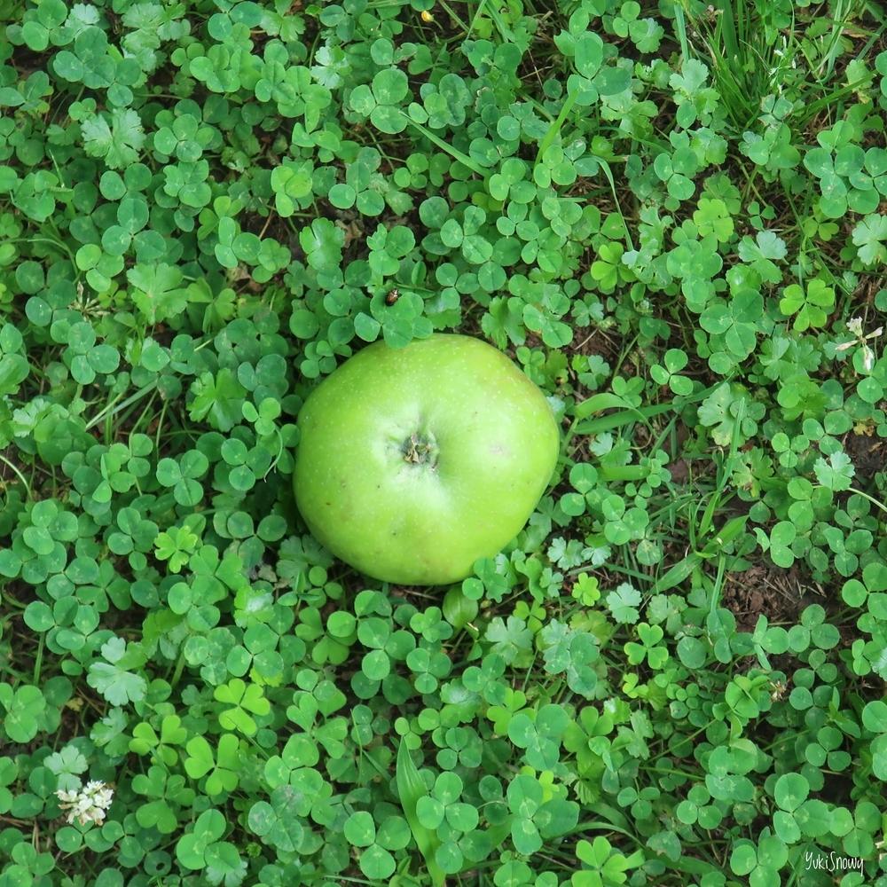 ニュートンのリンゴ@小石川植物園(2019-07-03 11:51)