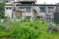[東京][街角][谷根千]猫の叢(2011-06-23 10:22)