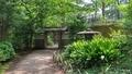 [東京][庭園]梅雨明けの朝の六義園(2019-07-29 10:22)