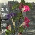 [Instaweather]WeatherShot(2019-08-08)