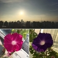 [園芸][花][朝](2019-09-06 06:04)