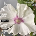[Instaweather]WeatherShot(2019-09-13)
