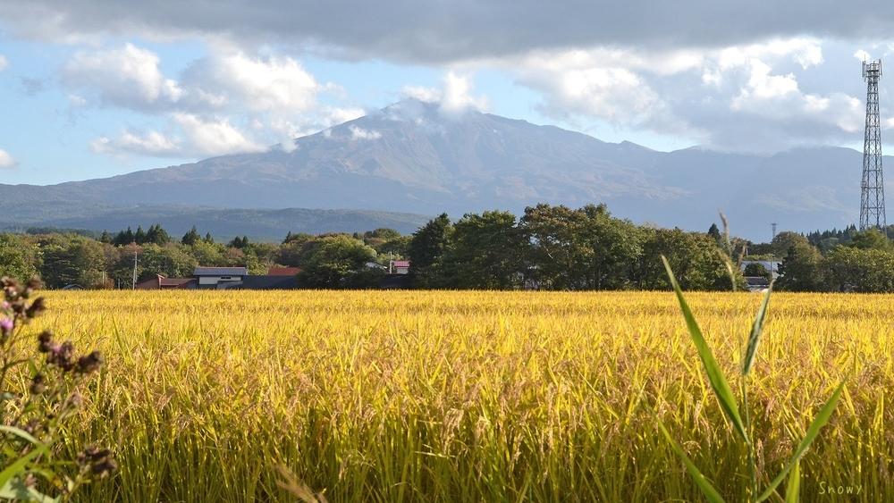 鳥海山と稲穂