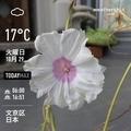 [Instaweather]WeatherShot(2019-10-29)