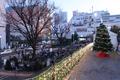 [クリスマス][東京]礫川公園(2019012-14)