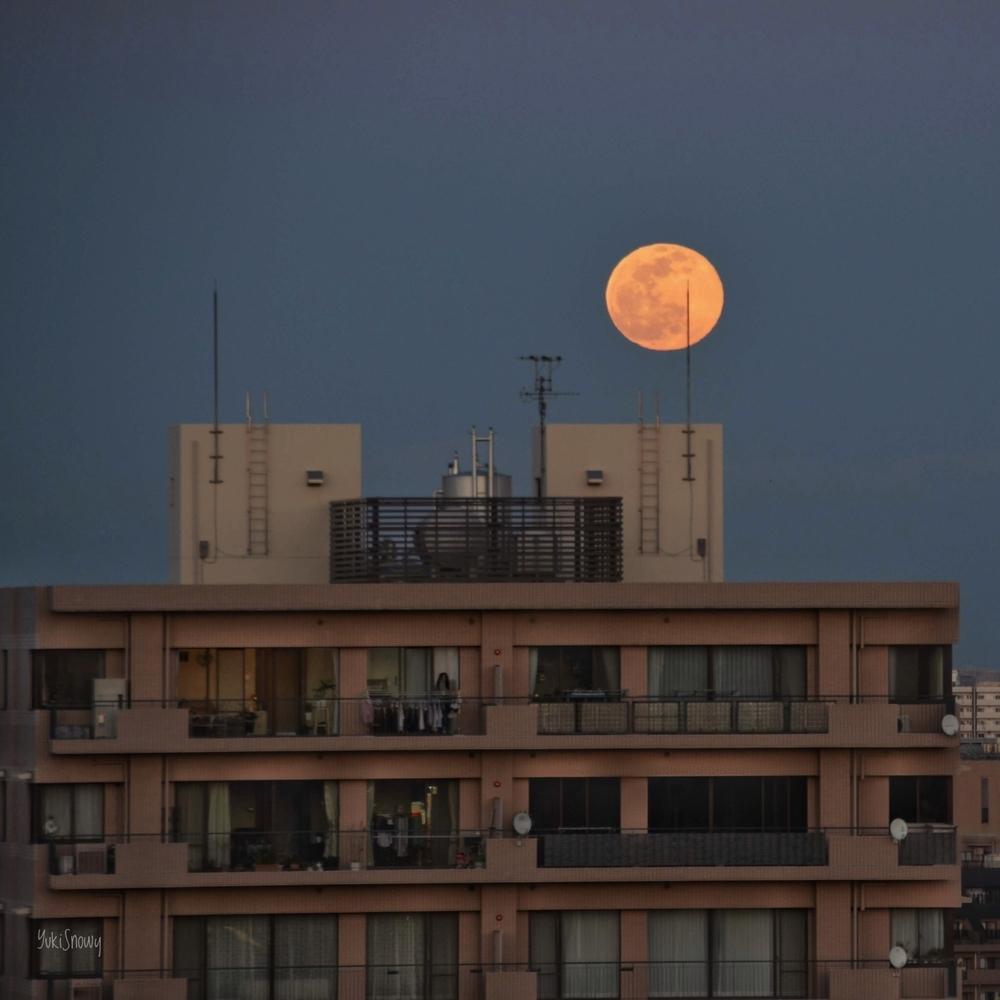 Wolf Moon(2020-02-09 17:20)