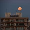 [空][月]Wolf Moon(2020-02-09 17:20)