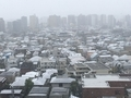 [東京][雪](2020-03-29 10:12)