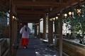 [神社]川越氷川神社(2020-03-19 12:21)
