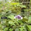 [Instaweather]WeatherShot(2020-04-01)