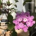 [Instaweather]WeatherShot(2020-04-05)