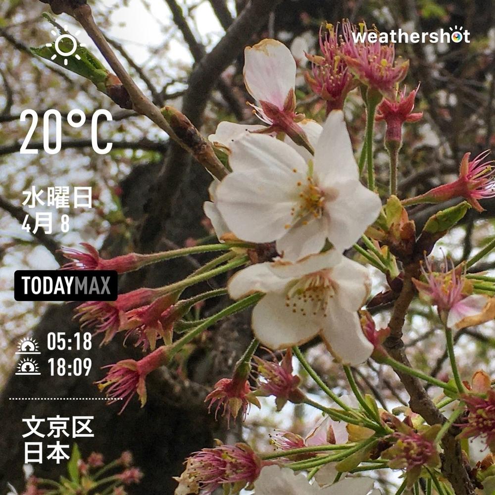 WeatherShot(2020-04-08)